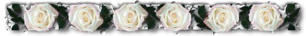 White rose divider